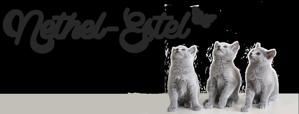 Nethel-Estel